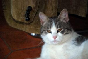 CAT SHARING